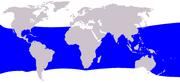 Brydes whale range