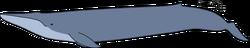 Blue whale size-2