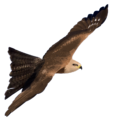 Hybrid Kite.png