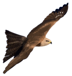 Hybrid Kite