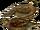 Koklass Pheasant
