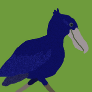 Blue Shoebill
