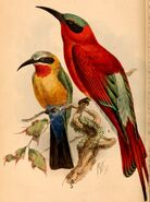 Birds of South Africa - IV