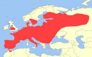 European Polecat range