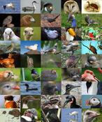 Bird Diversity2