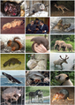 Mammal Diversity 2011