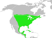 Dumetella carolinensis-map