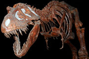 Fossil Tyranausaurus Rex at the Royal Tyrell Museum, Alberta, Canada