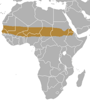 Pale fox range