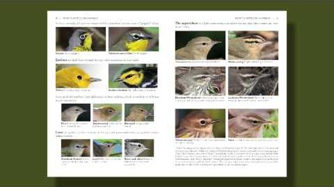 The Warbler Guide -- What to Notice