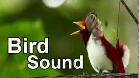 Bird Sound 2 Hours