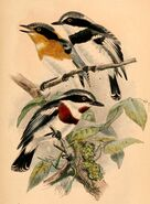 Birds of South Africa - X