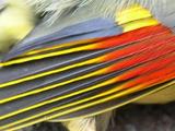 Wing-panel