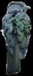Cuckoo Roller
