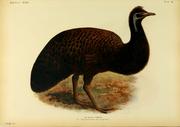 Extinctbirds1907 P40 Dromaius peroni0371
