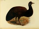 Emu (genus)
