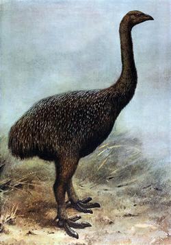 Megalapteryx