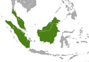 Malayan Weasel range