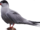 Commic terns