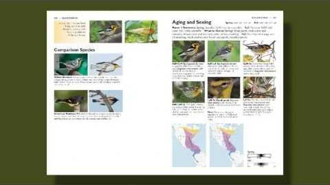 Introduction to The Warbler Guide
