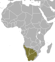 Cape fox range