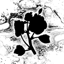 Theflower