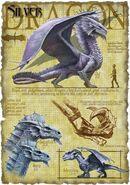 Silver dragon anatomy