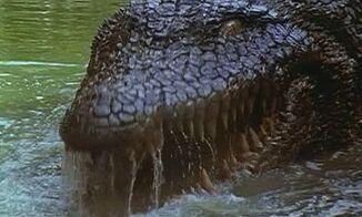 KillerCrocodile23