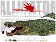 AlligatorFinalRegular