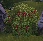 Dog Rose Berrybush