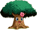 Maku Tree Female