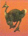 Epiornis (FFVIICC)