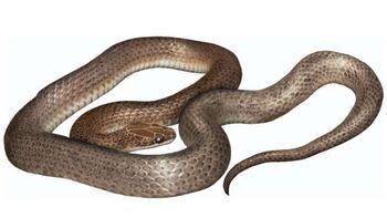 Dinner Snake