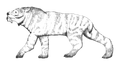 Ennedi Tiger