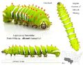 Silkmoth Caterpillar