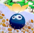 Seedy Pod