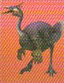 Pachyornis (FFVIICC)
