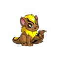 Xweetok (Neopets) Yellow