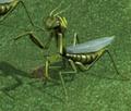 Mantis HoMM4