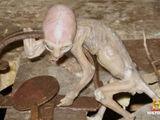Creature of Metepec