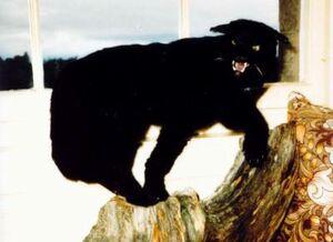 Kellas Cat