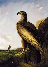 Washington's Eagle