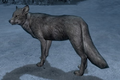 Snow Fox (Elder Scrolls)