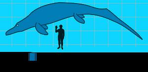 Cymbospondylus Lineup
