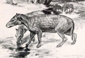 Elomeryx armatus