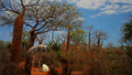 Elephantbirdrestored
