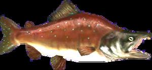 Reekfish