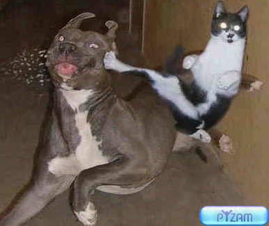 Dogcatfight 5092