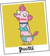 Poodle