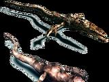 Phocomelus